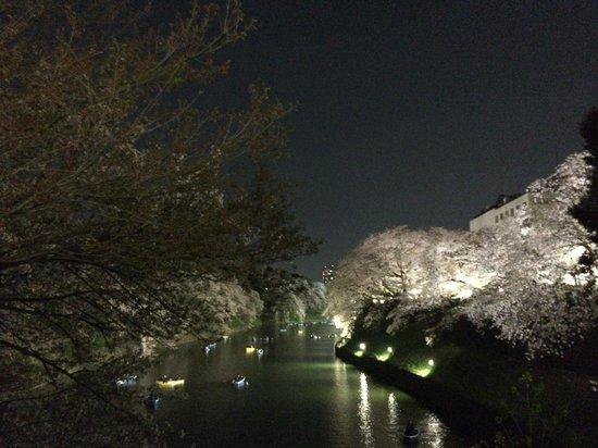 Chidorigafuchi: お堀の桜
