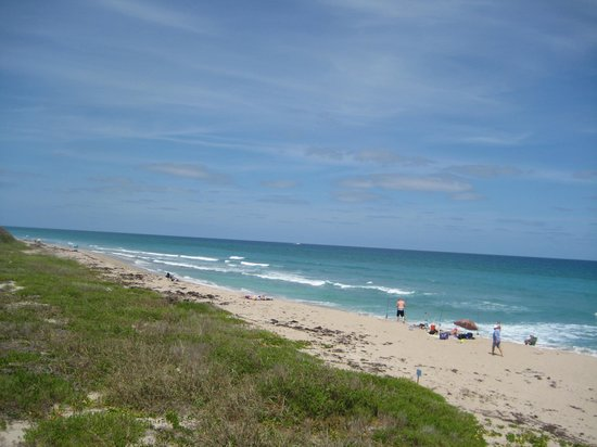 Hilton Garden Inn Palm Beach Gardens: The beach (a short ride)