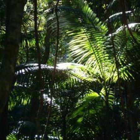 Beachside Motor Inn: Rain Forest on Fraser Island
