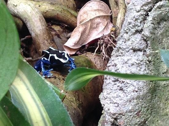 Tucson Botanical Gardens : real frog!