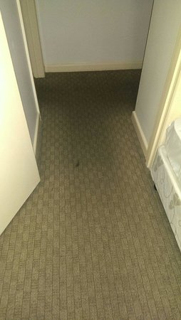 City Edge Apartment Hotel East Melbourne - Albert: Worn and stained carpet Room 6 Albert St