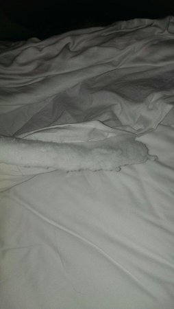 City Edge Apartment Hotel East Melbourne - Albert: Torned doona cover on bed Room 6 Albert St