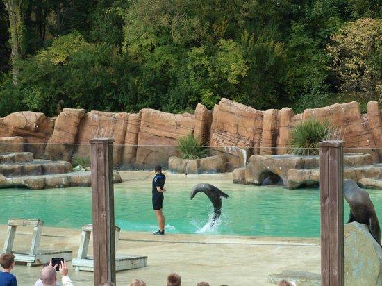 Blackpool Zoo: Sea Lions