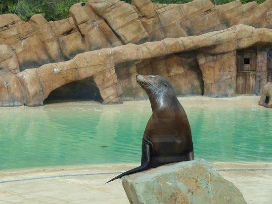 Blackpool Zoo: Sea Lion