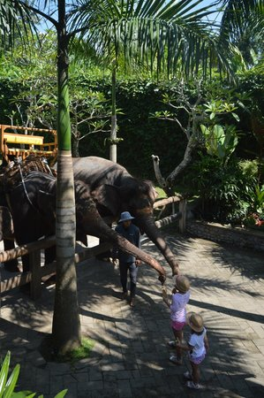 Bali zoo feeding the elefants after the ride