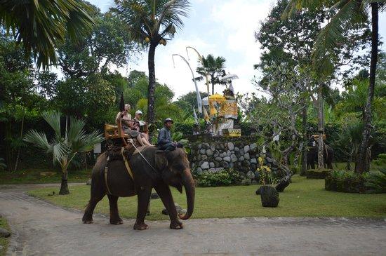Bali Zoo : Elefant ride