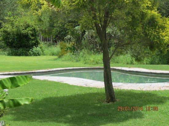 Southern Comfort Lodge: Swimmimg pool area