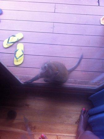 Phi Phi The Beach Resort : Un singe qui voulait rentrer dans notre chambre