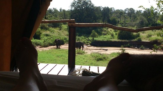 Garonga Safari Camp: Elephants from our room