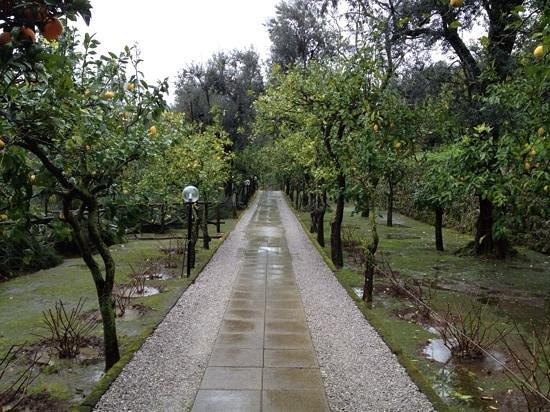 Villa Oriana Relais: lemon-tree lined entrance drive
