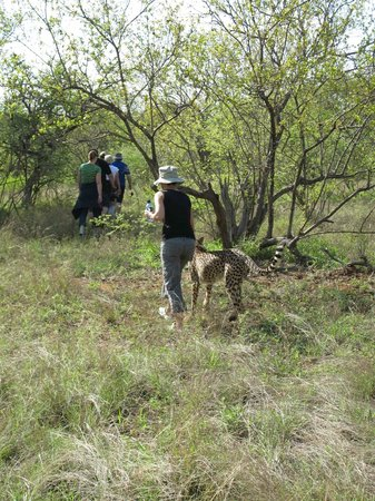 "Tshukudu Bush Camp: morning walk with the ""girl"""