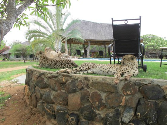 Tshukudu Bush Camp: Hmm, should I approach the pool from the other side...?!