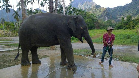 Elephant Hills Tented Camp : Elephant experience