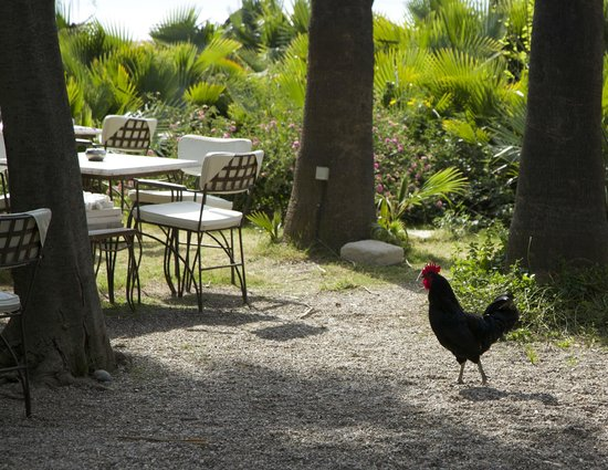 Olympos Lodge: Outside dining fully equipped with chickens and dogs