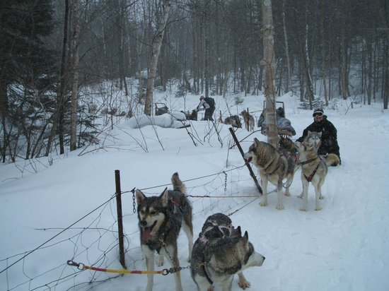"Expedition Wolf: On the ""Expedition"""