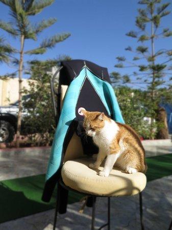Tigmi Ocean Glory : a cat from around