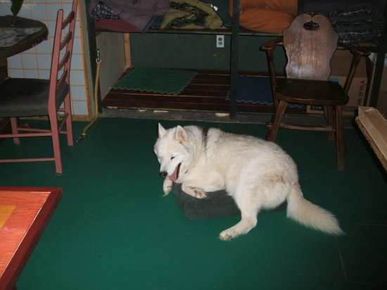 Expedition Wolf: An older Husky who stays in the warmth of the lodge