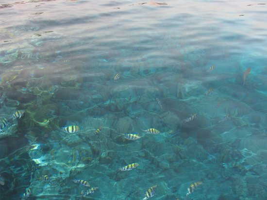 Melia Sinai: Море