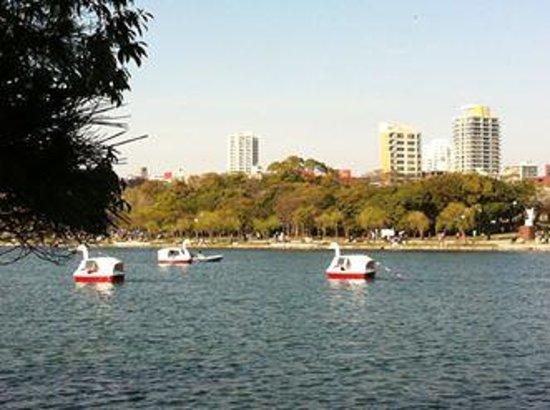 Ohori Park: Swan boats on the lake
