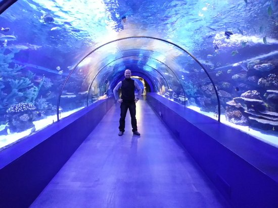 Tunnel - Picture of Antalya Aquarium, Antalya - TripAdvisor