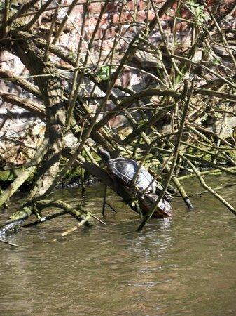 Rederij De Gentenaer : Turtles on the river bank