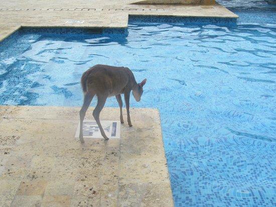 Hotel Caribe : Visitante en la piscina de niños