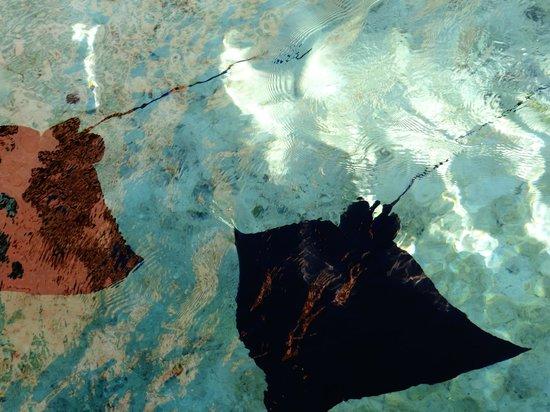Marine Habitat at Atlantis: Magnifique de voir tous ces animaux sur le complexe en se baladant !!