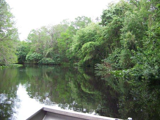 Airboat Wildlife Adventures: Arbuckle Creek