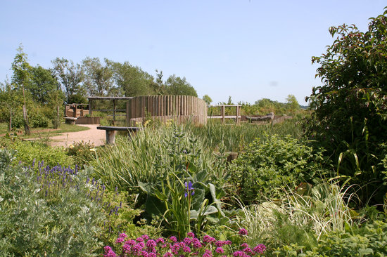 The Forest of Marston Vale - Forest Centre: The beautiful sensory garden - for a reflective walk or to look at our volunteers flower plantin