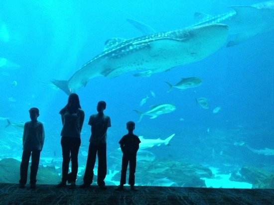 Georgia Aquarium : Our kids in front of the whale shark