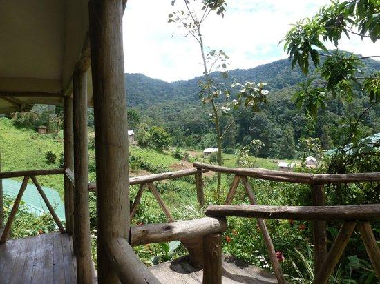 Gorilla Safari Lodge : View from room
