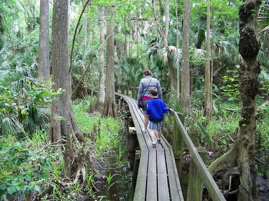 Highlands Hammock State Park : It's only scary for a little while