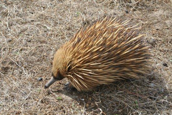 Hanson Bay Wildlife Sanctuary: 1
