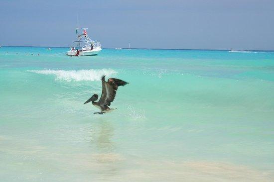 Iberostar Quetzal Playacar : Ocean