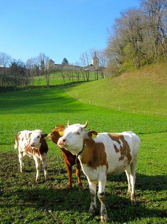 La ferme du bourgoz : the ladies of Gruyeres