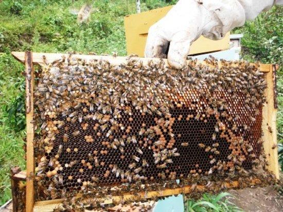 Mindo, Ecuador: Happy bees