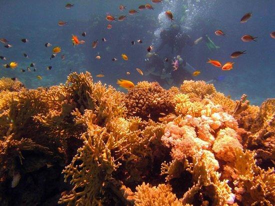 Rehana Sharm Resort: diving! :)