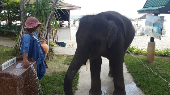 Le Meridien Phuket Beach Resort: Elephant