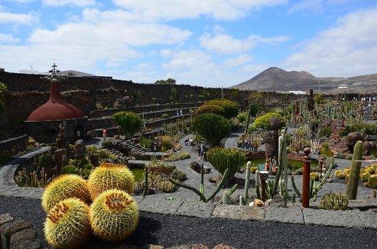 es hat sich gelohnt - Picture of Jardin de Cactus, Guatiza - TripAdvisor