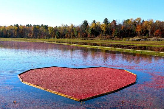 Cranberry Farm Pictures
