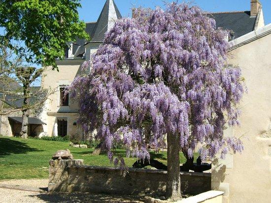 La Maison Aubelle : beautiful wisteria