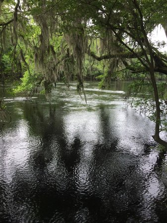 Suwannee River State Park: Suwannee River from a trail that runs along the river at the park