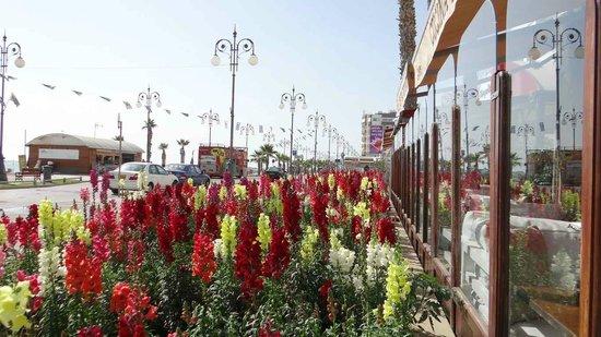 Krasas Beach Apts: Larnaca is beautiful the year round!