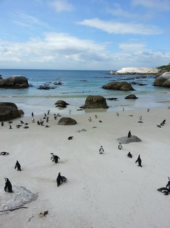 Simon's Town, South Africa: Penguins on the beach