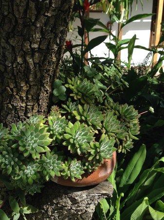 El Albergue Ollantaytambo: Garden succulents