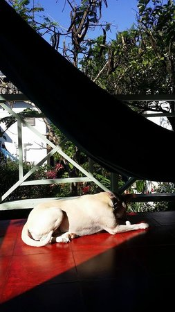 Catcha Falling Star Gardens: watch dog :) view of balcony