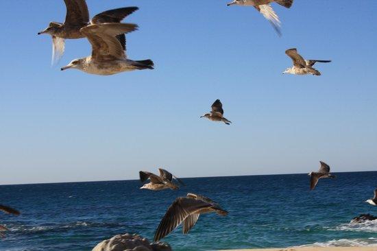 Baja Point: Pássaros