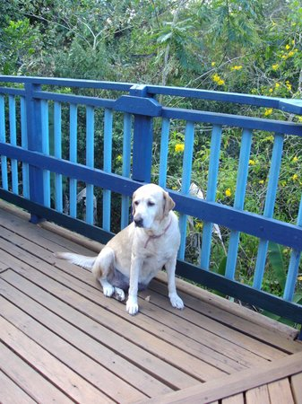 Adventure Eco Villas : Friendly guide dog