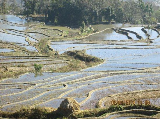 Yuanyang Rice Terraces: A closer view