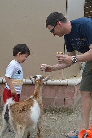 Big Cat Habitat and Gulf Coast Sanctuary : Feeding the Goat